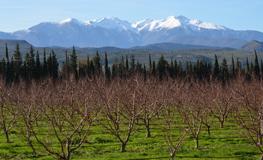 Gîte Pyrénées Orientales - Vue sur le Mont Canigou