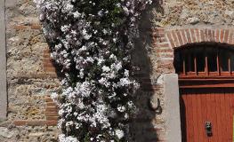 Gîte Pyrénées Orientales - Cour fleurie